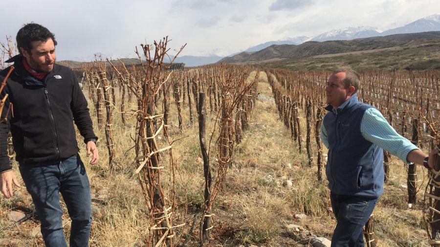 Zuccardi: lugares de vinos, vinos de lugares