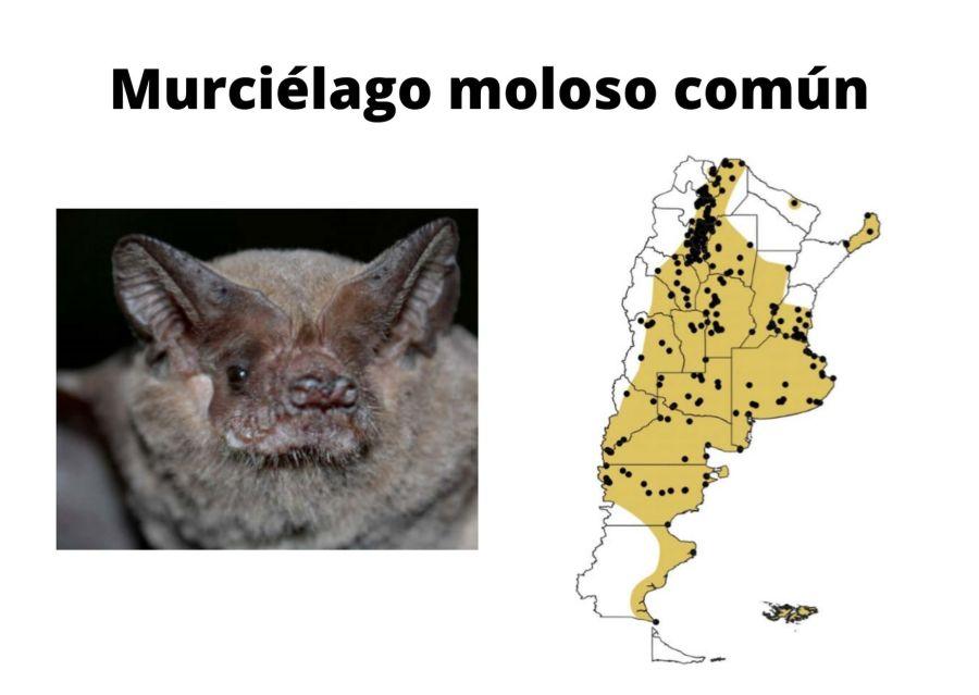 Murciélago 3