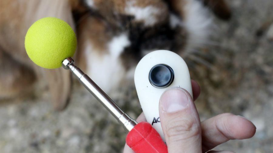 Entretener a las mascotas en cuarentena