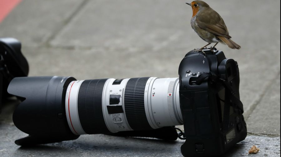 50 fotos de animales de Argentina y el mundo