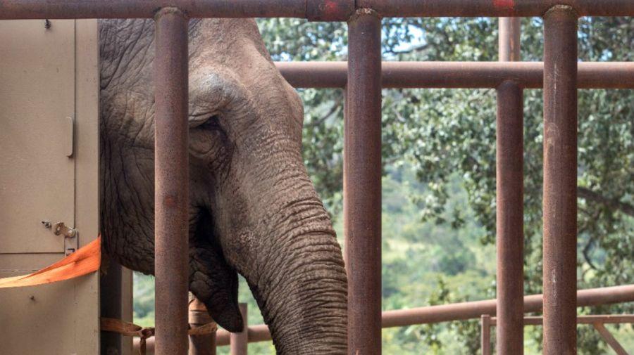 elefanta mara brasil