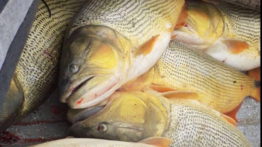 0906_depredacion_pesca