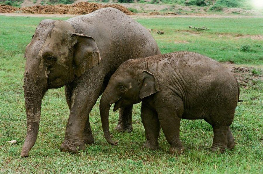 0626_elefantes5