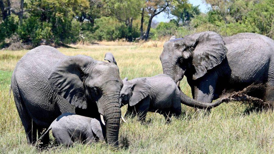 0701_elefantesboswana