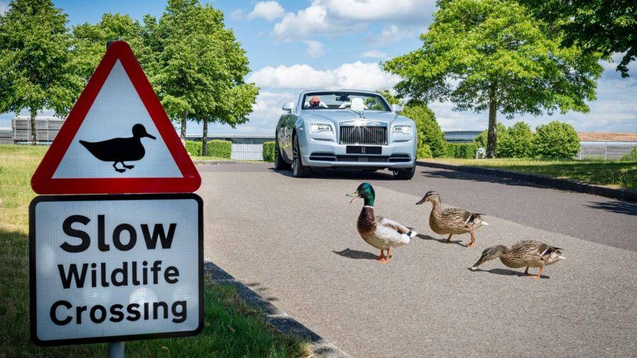 Rolls-Royce también cuida a sus patitos