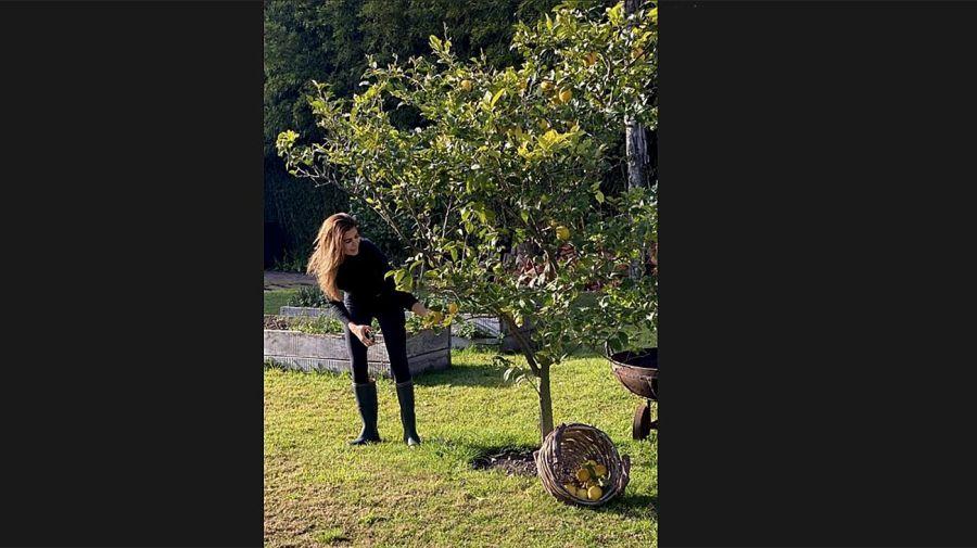 Juliana Awada cosechando Limones 20200708