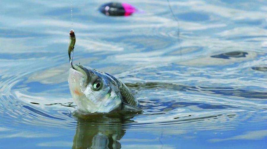 1807_protocoles_sanitarios_pesca