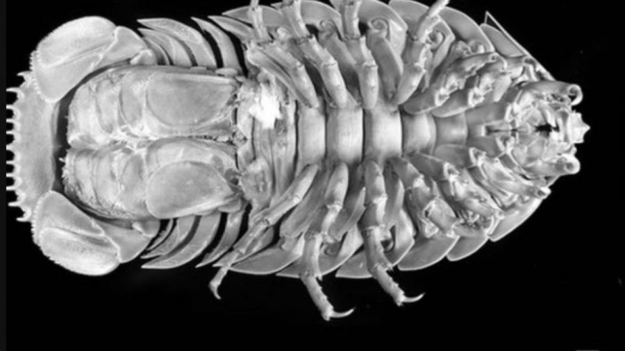 0723_cucaracha gigante