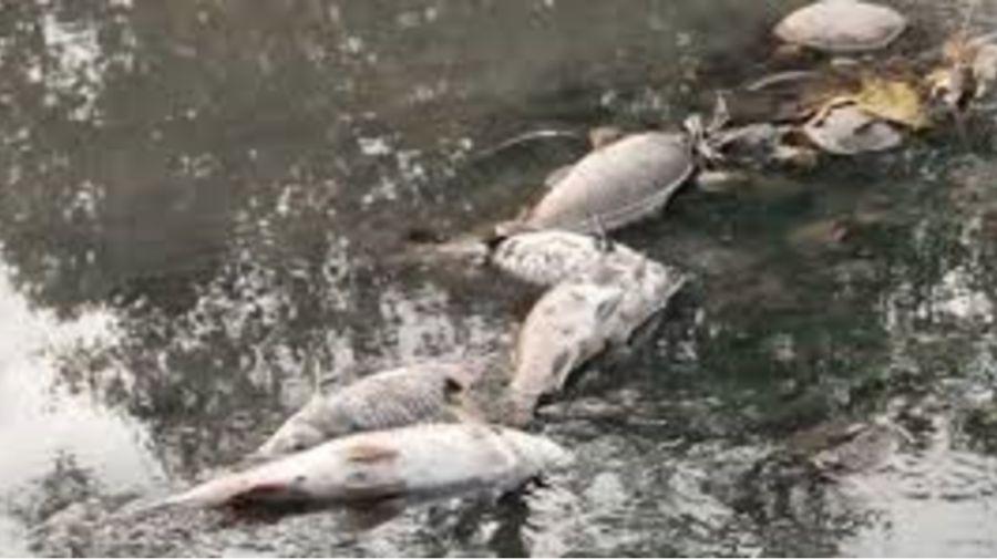 0727_peces muertos