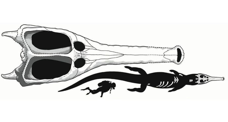 0408_cocodrilo_fosil