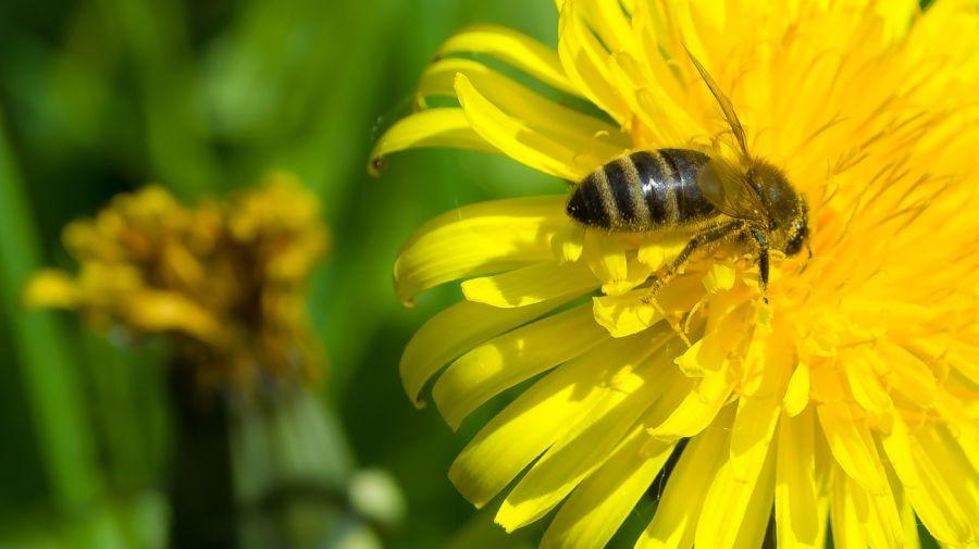0508_perdida_plantas_abejas