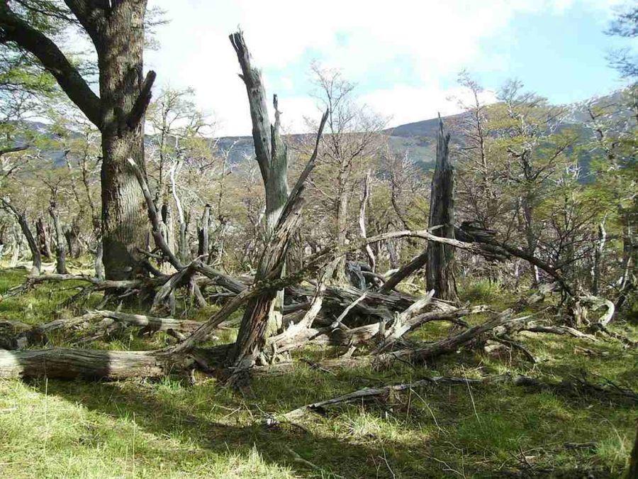 1108_bosques