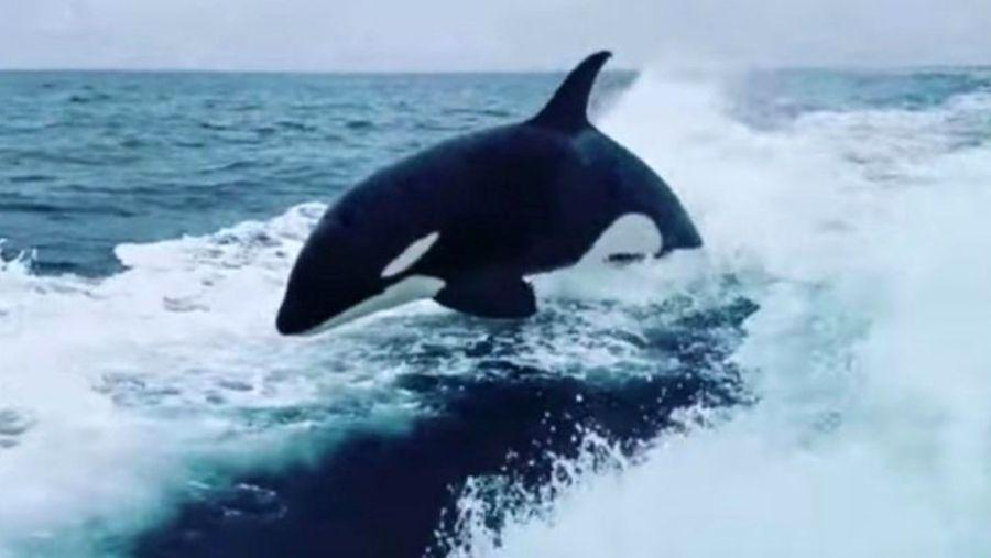 1208_orcas_pescadores