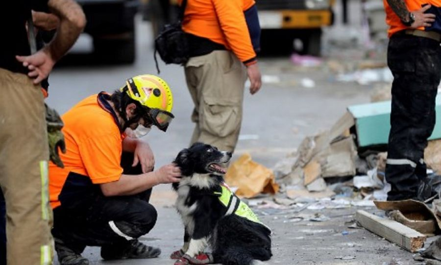 Explosión en Beirut-perro rescatista-flash