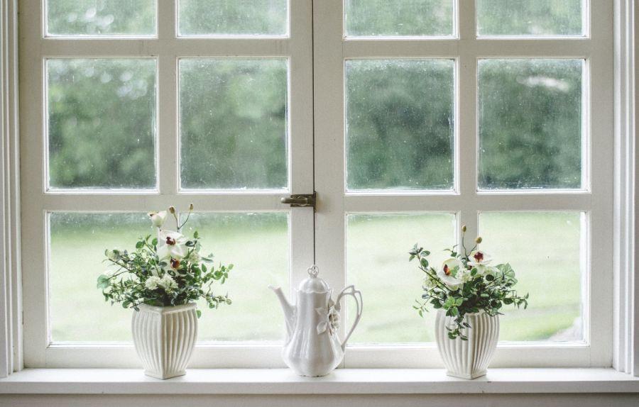 Las búsquedas más populares de plantas en el hogar