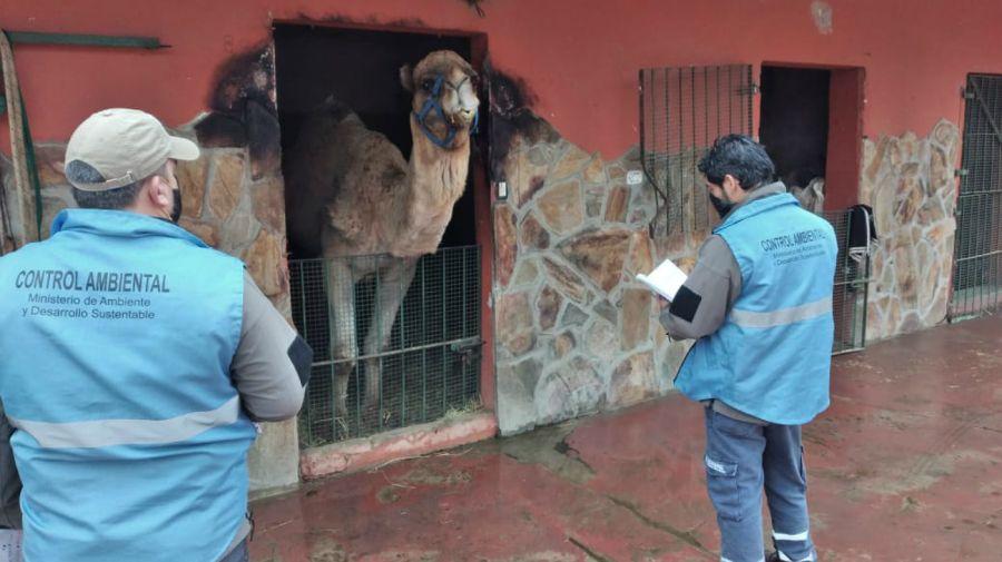 Funcionarios del miniterio de Ambiente inspeccionan el zoológico de Luján, previo a su clausura.