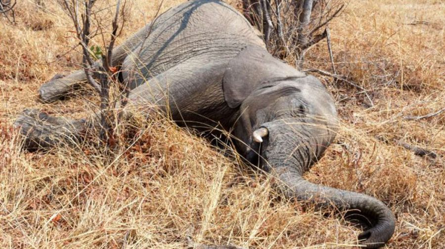 2309_elefante