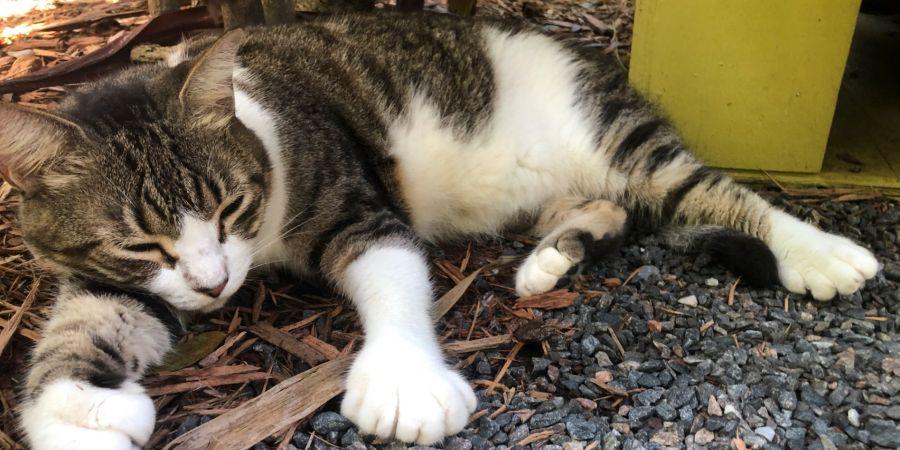 La gran atracción de la casa de Hemingway son los gatos