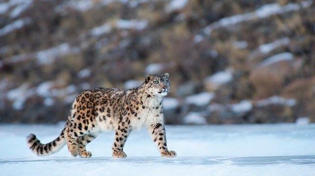 1005_animalesextincion