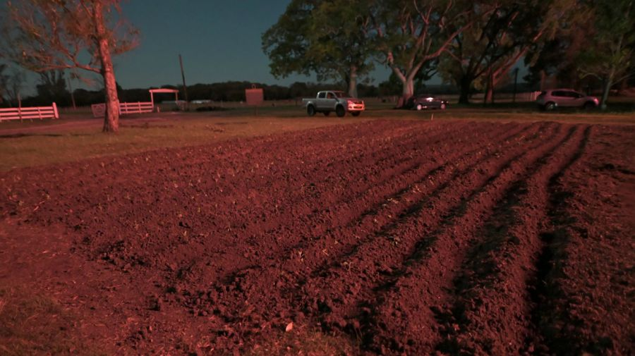 Plantines de perejil y el terreno que los militantes del 'Proyecto Artigas' habían sembrado en el campo de los Etchevehere.