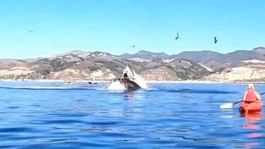 dos mujeres casi son devoradas por una ballena en California 20201104