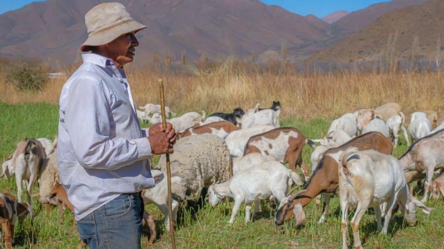 E-Levenc, plataforma argentina paraconectar productores con consumidores