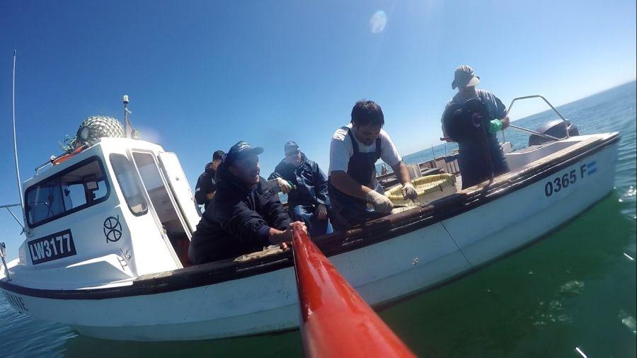 0611_pesca_marcacion_tiburon_gatuzo
