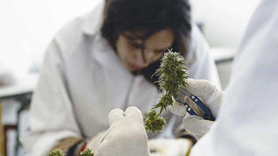cannabis medicinal 20201112