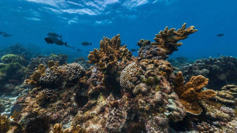 1117_coraldearrecifes