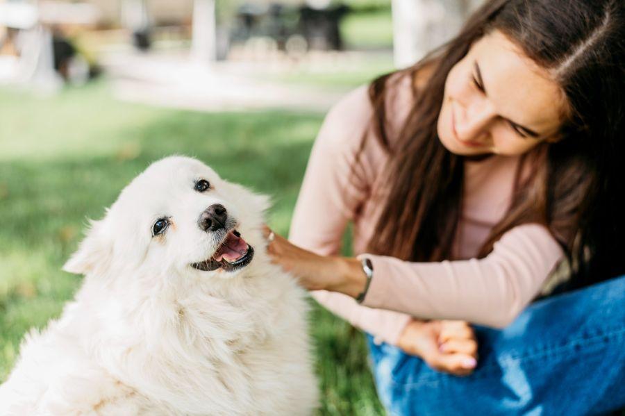 Otitis en los perros
