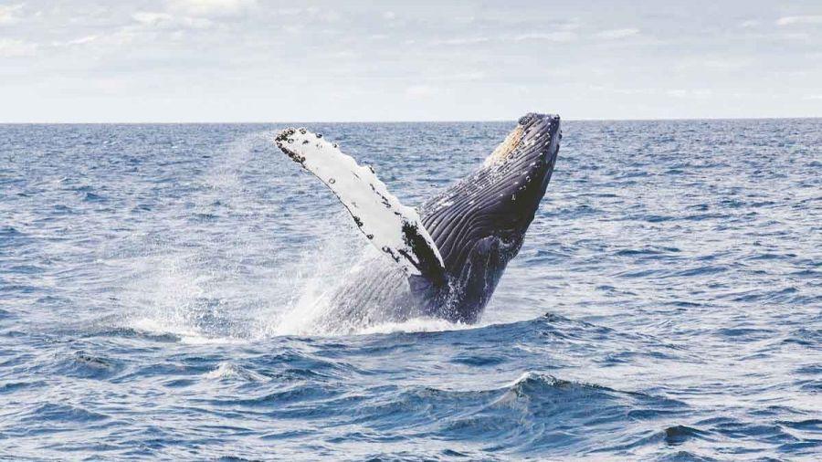 1127_ballenas azules