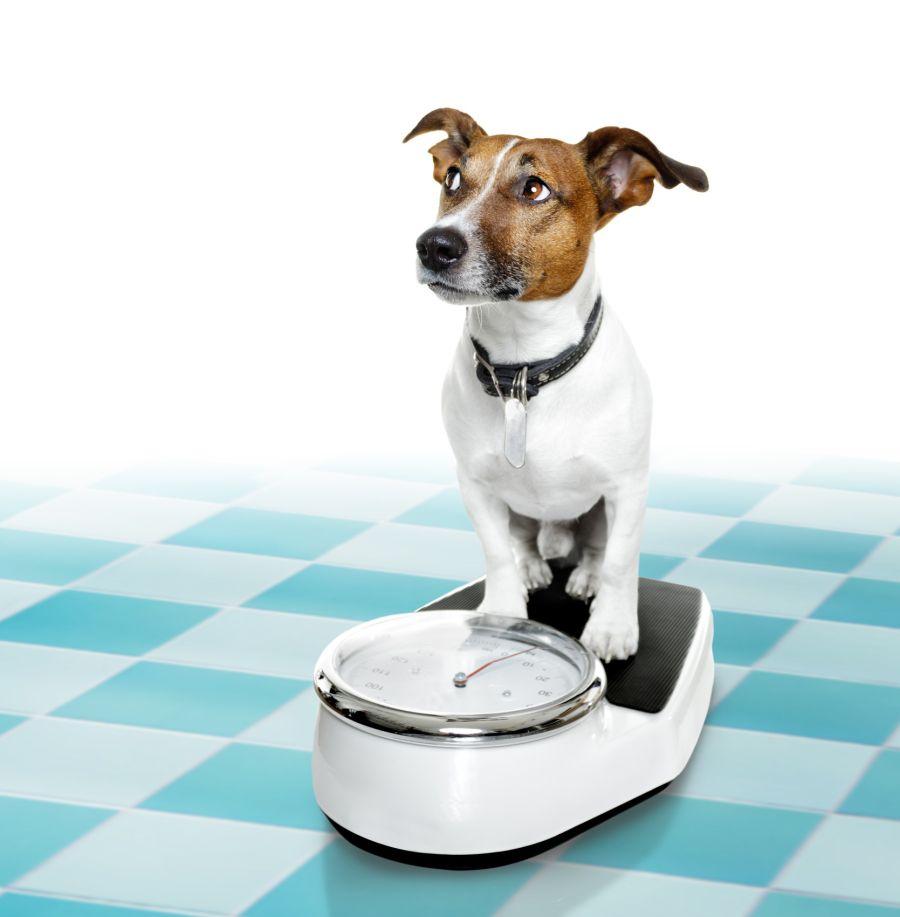 Perros y gatos a dieta
