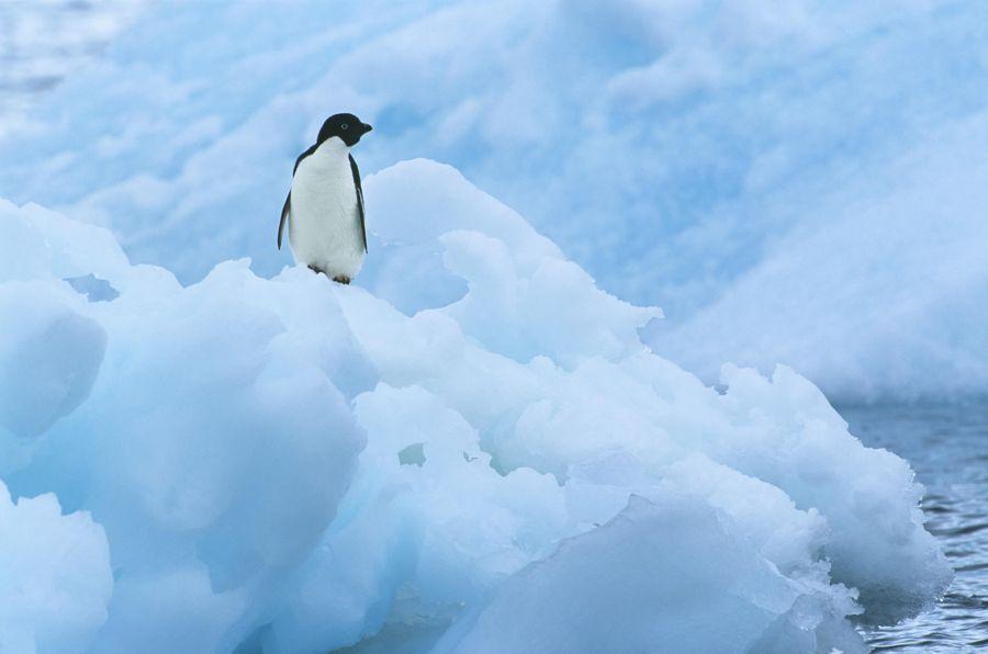 1201_tratadoantártico