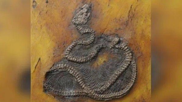 1218_fósilpitón