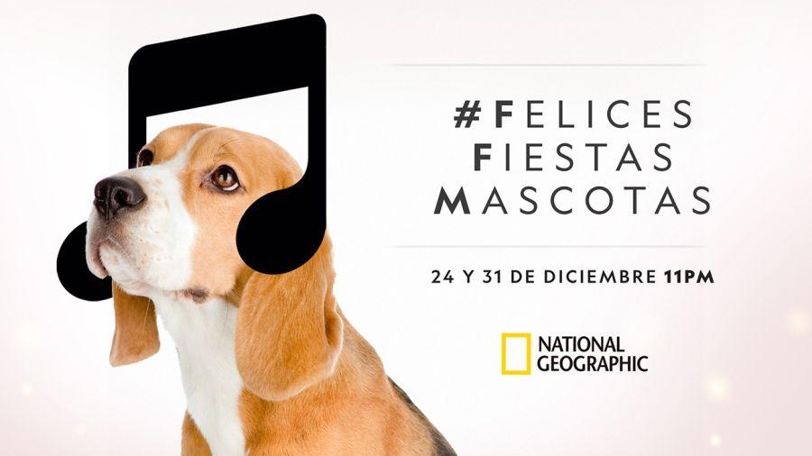 1222_mascotas