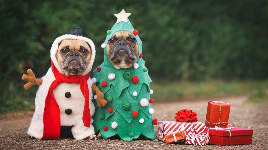 Cuidados Mascotas Fiestas