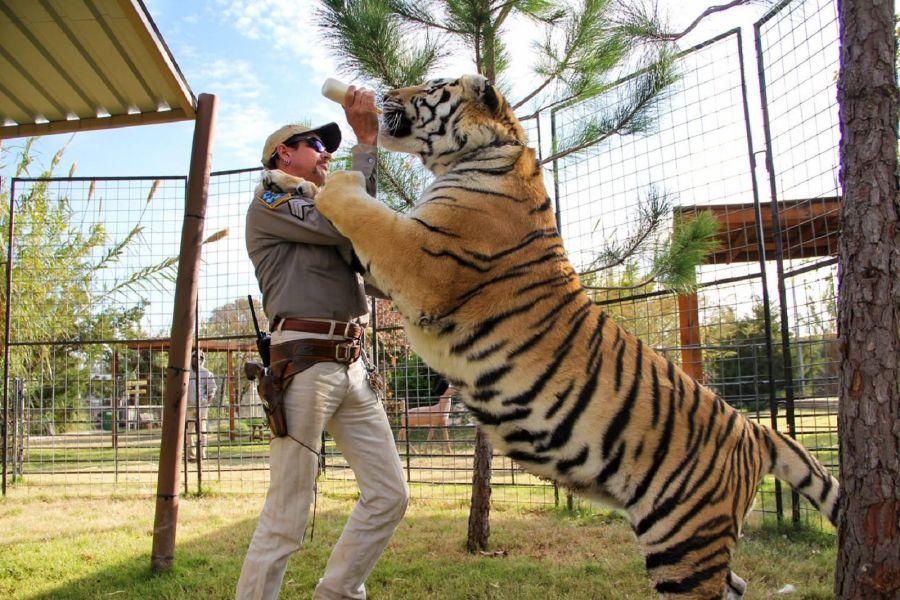 0108_tigres