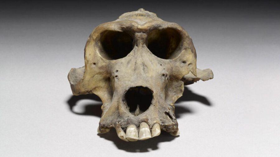0111_babuinosmomificados