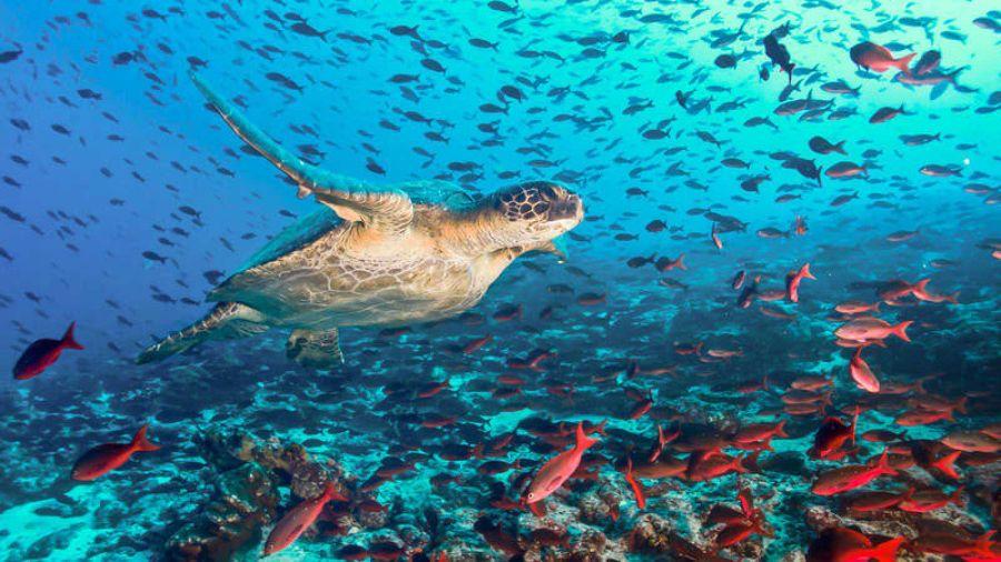0115_islasgalápagos