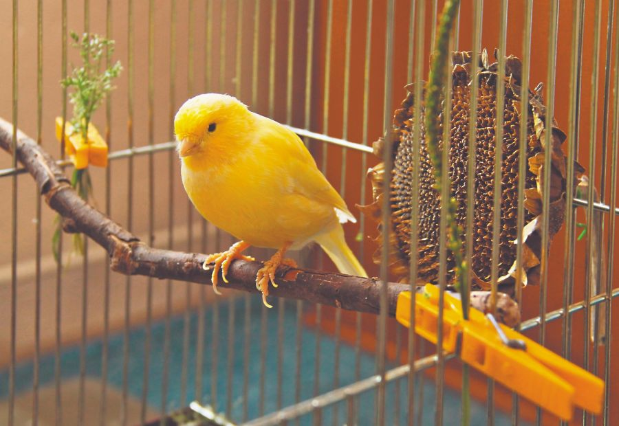 Consejos para tener canarios en tu casa