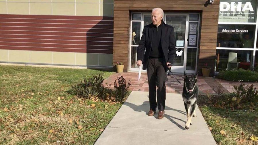 los perros de Biden