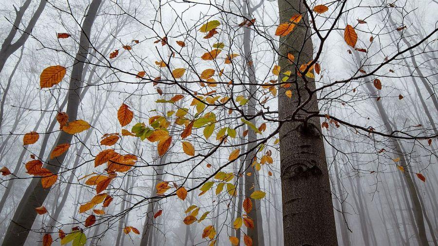 0128_bosques