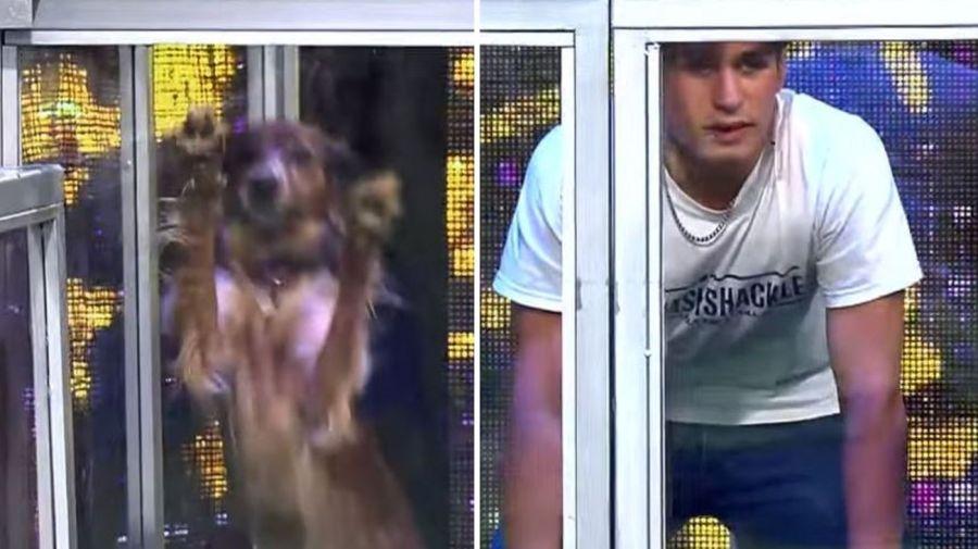 Juego perros en Bienvenidos a Bordo