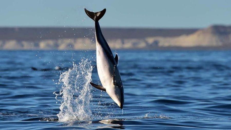 0302_delfines