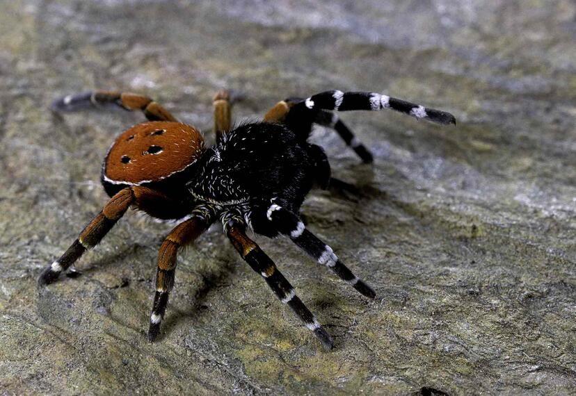 0218_arañas