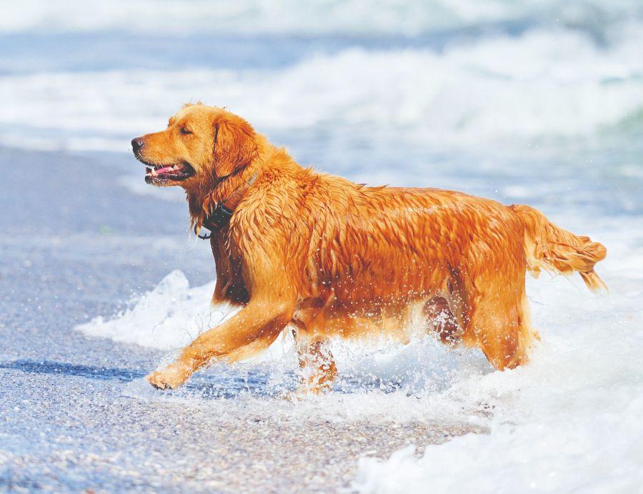 Perros nadadores