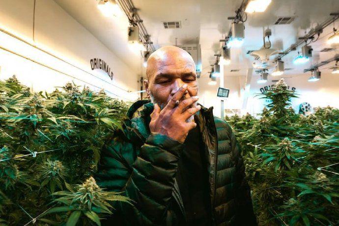 Mike Tyson dejó el Ring Side para dedicarse a la marihuana