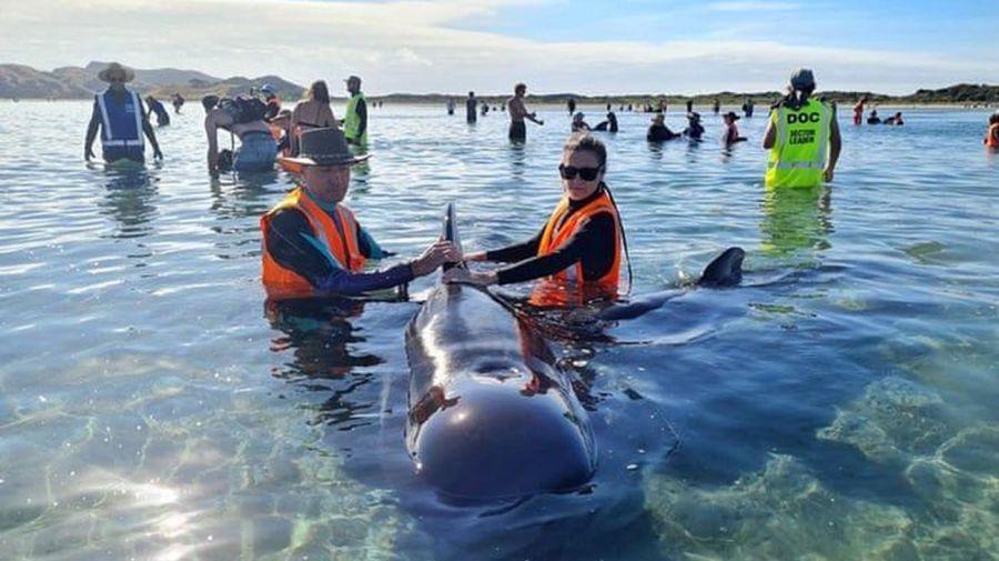 rescate de ballenas en Nueva Zelanda 2021024