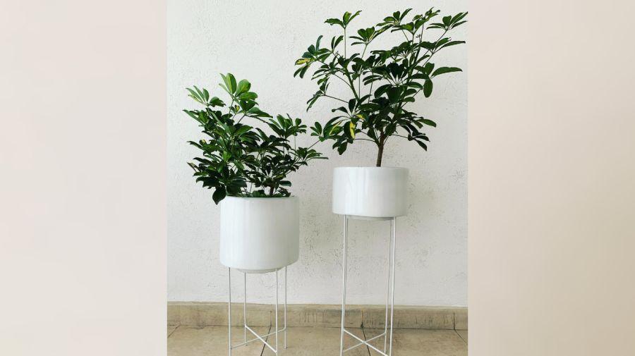 Plantas de interior: tipos y consejos para casa