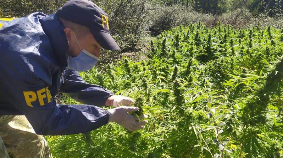 Plantaciones Marihuana Córdoba 20210311